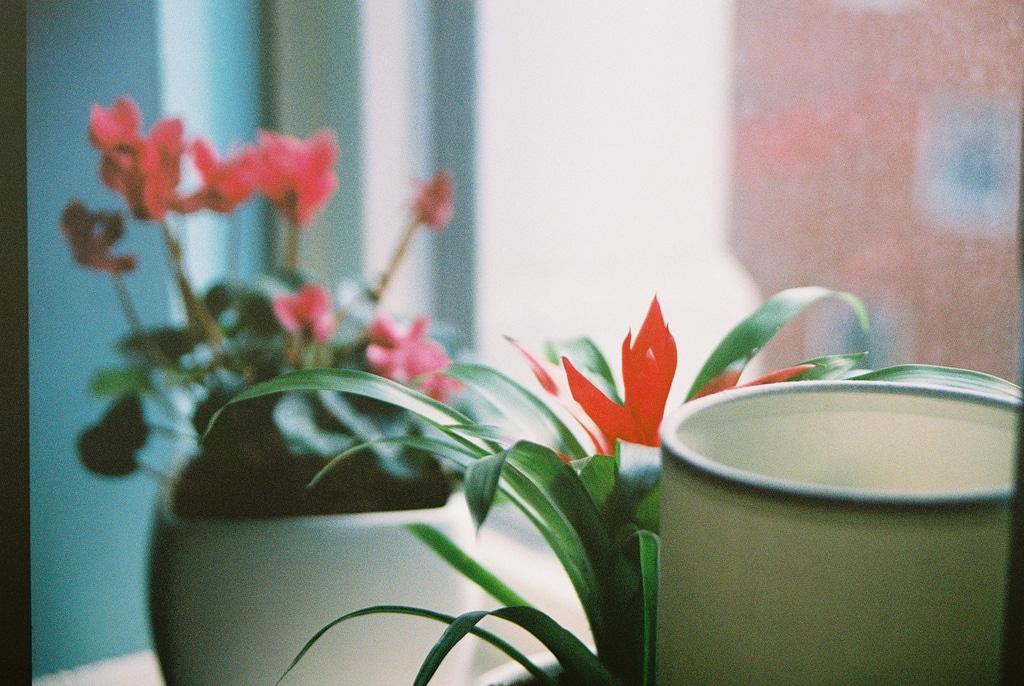 Comment prendre soin de la plante verte?