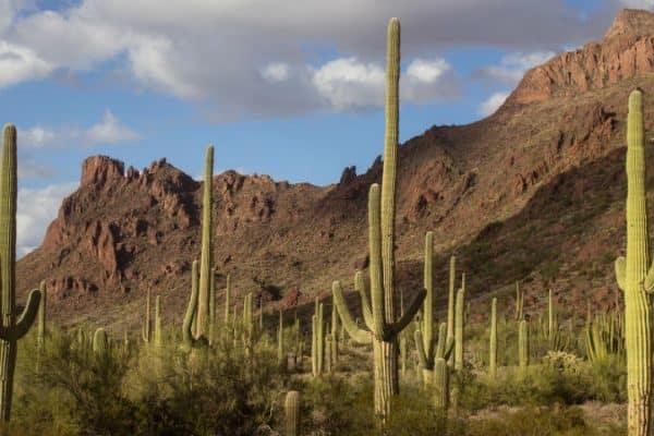Pourquoi ne devrions-nous pas offrir des cactus?