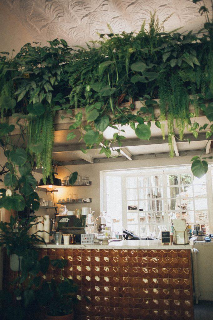 Quelle plante dans la cuisine?