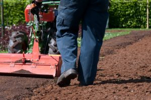 Quelle pelouse pour les terrains secs?