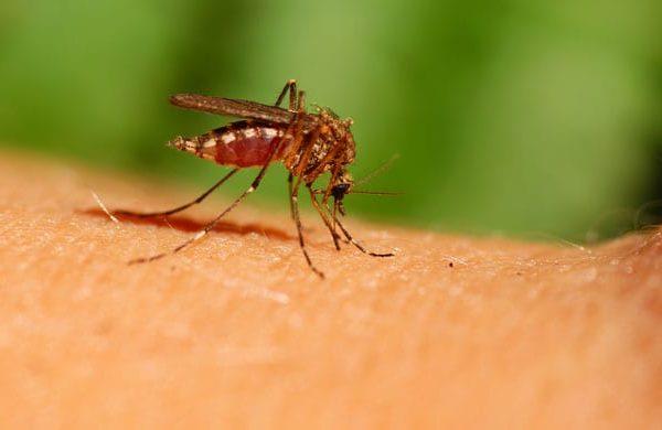 Comment se débarrasser des moustiques dans son appartement?