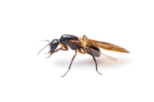 Comment se débarrasser d'une invasion de mouches dans la maison?